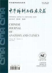 《中华解剖与临床杂志》