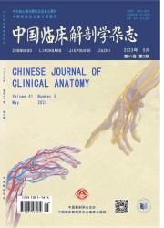 《中国临床解剖学杂志》