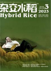 《杂交水稻》