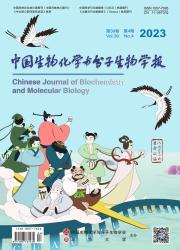 《中国生物化学与分子生物学报》
