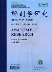 《解剖学研究》